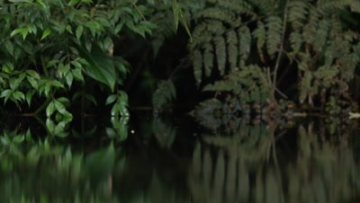 Small Insects Fly,Hover Above River in Rainforest