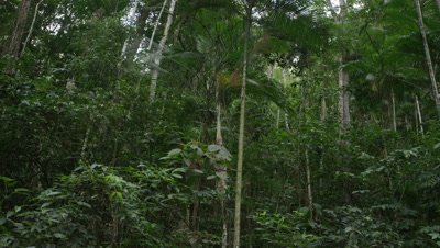 Wide View,Lush Rainforest Scenic