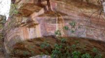 Looking Up At Aboriginal Rock Art On Cliff, Kakadu