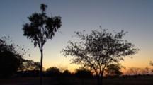 Desert Plants Silhouetted In Wind, Hughenden, Queensland