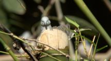 Peaceful Dove On Nest