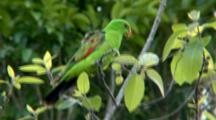 Red-Winged Parrot Feeds