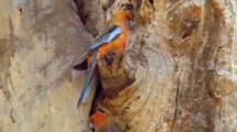 Crimson Rosella Perched On Tree Trunk
