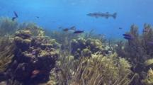 Reef Travel, Barracuda In The End