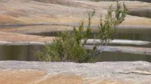 Pools On Granite Landscape (Creek)
