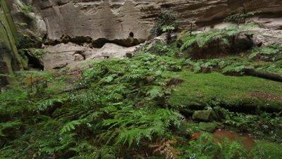 Amphitheater Carnarvon Gorge