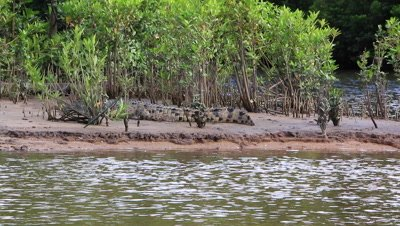 Salt water Croc,Kakadu,Top End