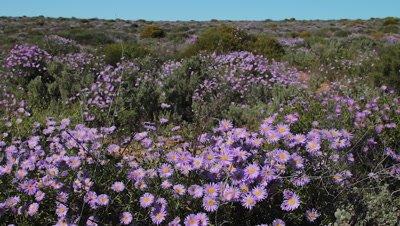 Flowers wide shot