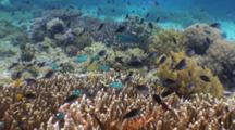 Rich Reef Life, Fauna And Flora