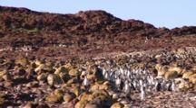 Magellanic Penguins Walkway Timelapse