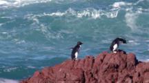 Rockhopper Penguins On Cliff
