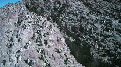 Flight over rockhopper penguin colony,Rio Deseado