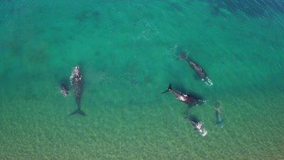 Whale aerials