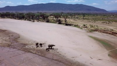 Herd of elephants in a riverbed,aerial