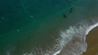 Pod of Orcas approaching sea lions in the shallow water,4K Aerial