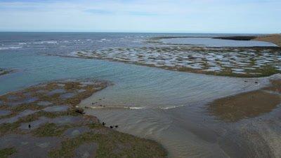 Punta Norte sealion pups play in tide pools,4K aerial wide shot at low tide