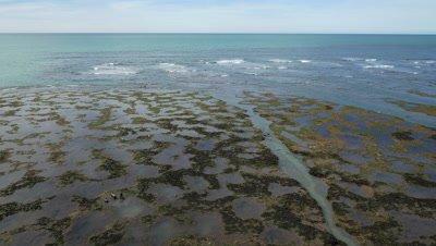 Punta Norte sealion pups play in tide pools,4K aerial travelling sideways