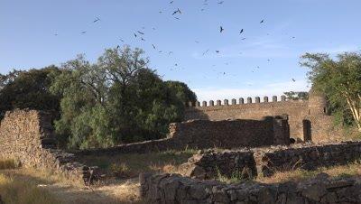 Gondar Fasil Ghebbi, back walls with birds