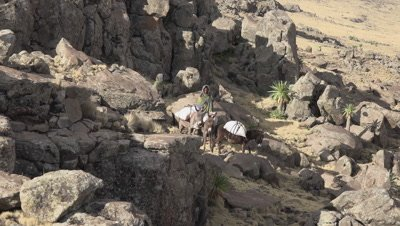 Simien mountains shepherds with donkeys