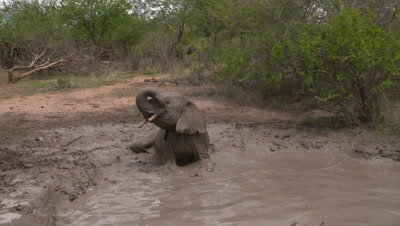 African elephant baby going crazy in waterhole, UHD