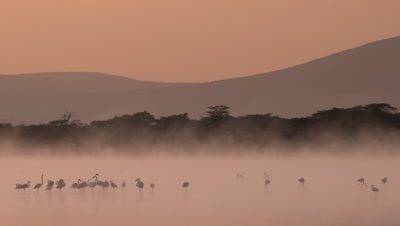 Flock of flamingos in the morning mist over an african lake, 4K