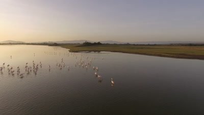 Move over Flamingos in african lake at sunrise, 4k Aerial