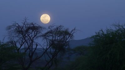 Full moon over Acacia tree in African bushland, 4K