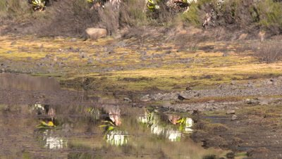 Lake Alice shore with bird drinking, UHD 4K