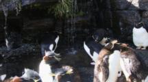 Rockhopper Penguin Shower