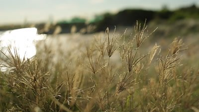 Close up of grass with beach in background