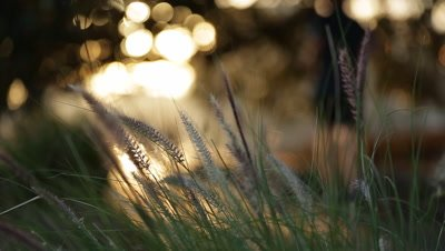 Close up of grass with sun in background