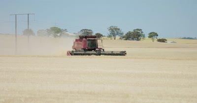 Farming - tractor cutting wheat