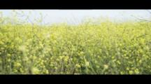 Red-Headed Girl Happy Natural Pushes Bicycle Through Field Of Yellow Flowers. Slow Motion.