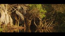 Gliding Shot Of A Mangrove-Lined Estuary, Morning Light.