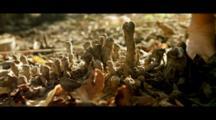 Close Up Of Mangrove Pneumatophore And Root.