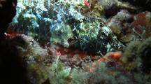 Parrotfish Sleeping In Sponge