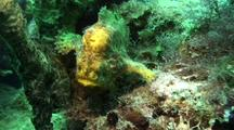 Longlure Frogfish Walking