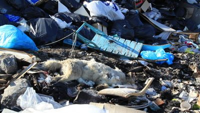 killed sledge dog and sledge on the dumpster,no ned for the dogs anymore because of the global warming