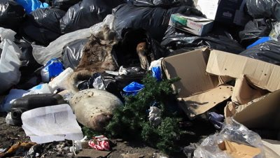 seals and fur on the dumpster,can not be sold,meat not used for dogs anymore because of less sledge dogs