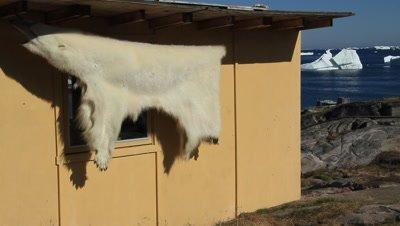 polar bearskin drying in the arctic sun,distant iceberg drifting