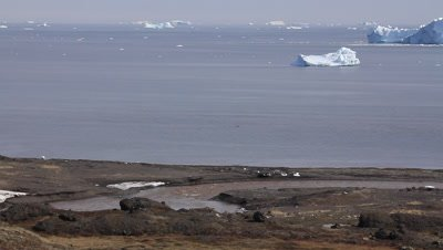 a glacial water stream runs out into the arctic sea,icebergs in the background
