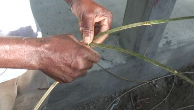 The very first steps in making a fish trap out of bamboo