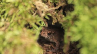 small toads taking shelter under an old stump
