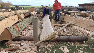 splitting and handling oak planks for construction of a copy of a viking ship