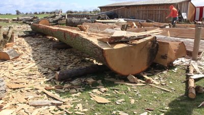 splitted oak log to be planked for the reconstruction of the Ladby viking ship