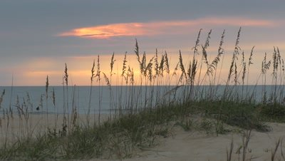 dunes, sea oats, early morning calm ocean in background