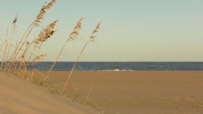 4K - beach, sea oats on sand dune
