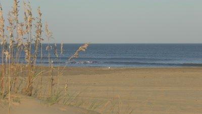 sea oats, beach calm ocean
