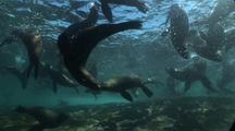 Seals Near Reef