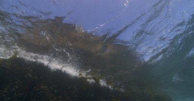 Cape Fur Seals exits water